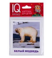 Умный малыш.  Животные полярных широт.  Набор карточек для детей.